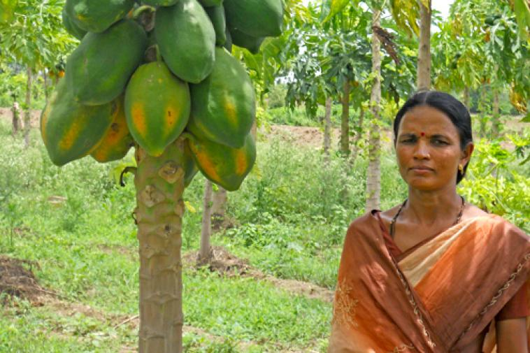 success story of organic farming in india