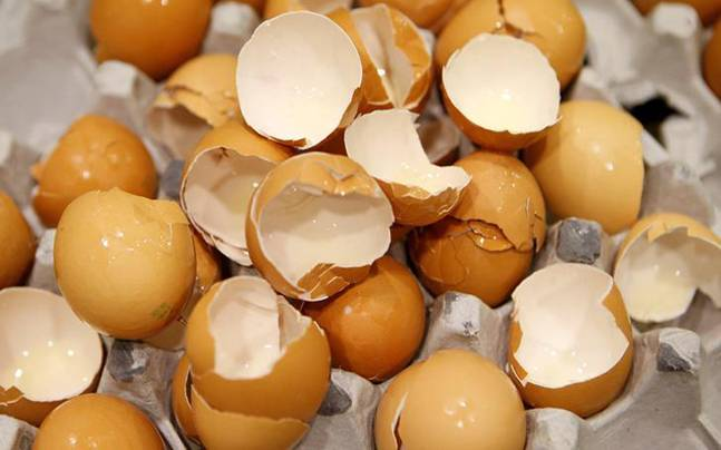 artificial 'fake' eggs made out of plastic